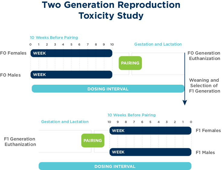 Two Generation Reproduction Toxicity Study