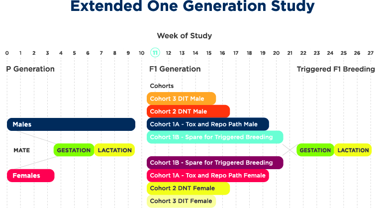 Extended One Generation Study