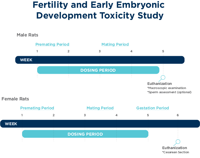 Fertility and Early Embryonic Toxicity Study