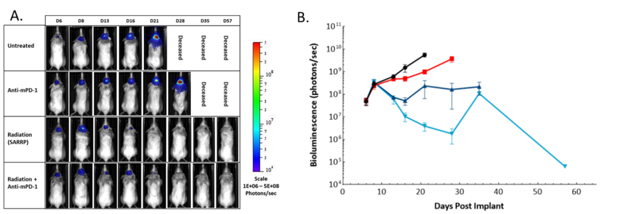 Figure 5: Effect of focal radiation, anti-mPD-1 and combination therapy in intracranial GL261-luc tumors in female C57BL/6 albino mice. A. Representative images. B. Quantification of BLI signal (photons/sec).