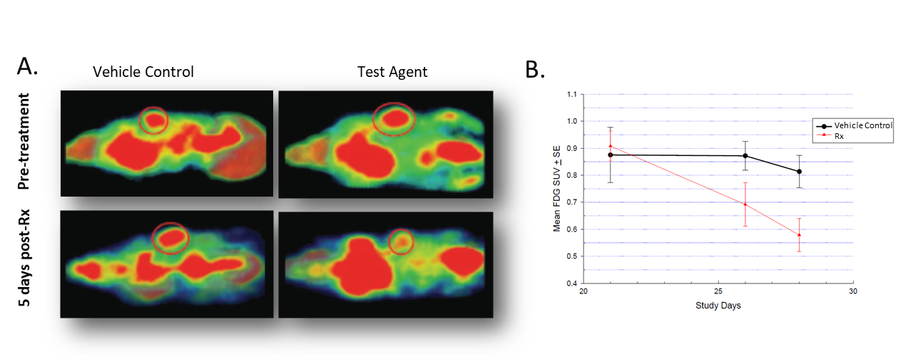 Figure 2. Effect of treatment on 18F-FDG uptake in Colo-205 tumor bearing mice. A. Coronal images  before and after treatment. B. Quantification of 18F-FDG accumulation in tumors.